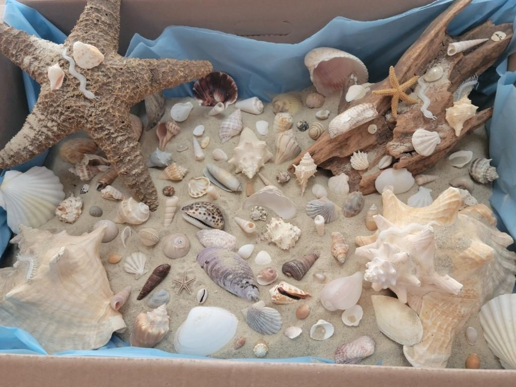 count the seashells in the box